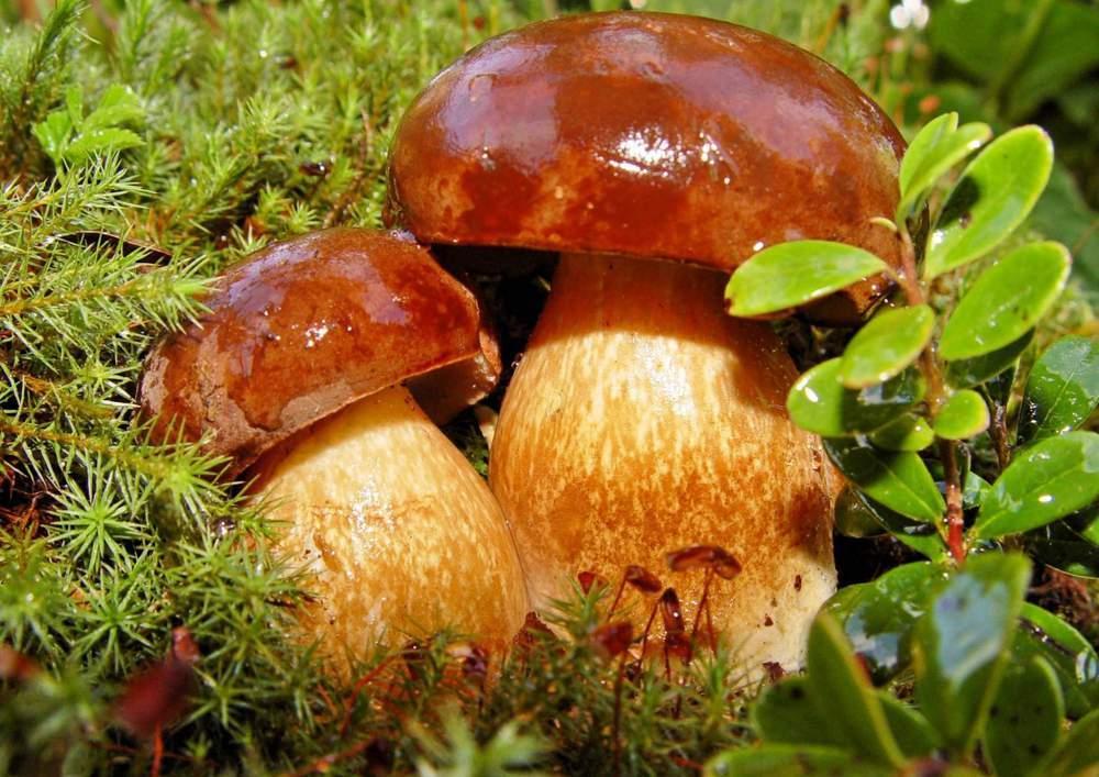 обои на рабочий стол осень грибы природа 2666