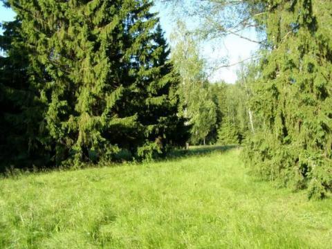 30 соток, лес на участке, 115 км. от МКАД, западное направление. - Фото 1