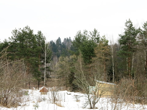 Большой участок 52 сотки. Звенигород 8 км. к.н. 50:20:0090218:314 - Фото 1