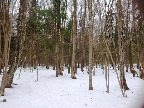 Продаётся лесной участок на Калужском шоссе, 18 км. от МКАД рядом с . - Фото 4