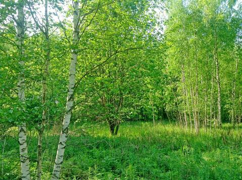 Земельный участок (9 соток) в СНТ Дони Гатчинского района - Фото 2