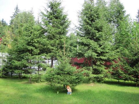 Большой участок 40 соток с лесными деревьями. Газ. Охрана. - Фото 3