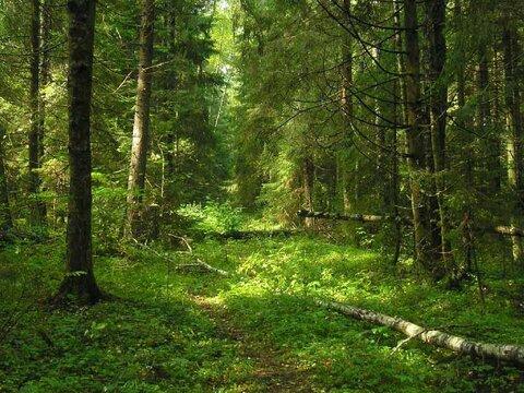 Продаются участки в лесу, 200 соток. Московская область, Можайский рай - Фото 1