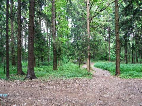 Лесной участок в д. Тимонино. - Фото 3