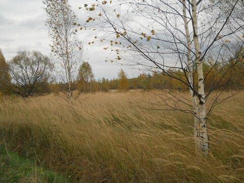 Участок 15 соток в д.Неверово, Клепиковского района. - Фото 2