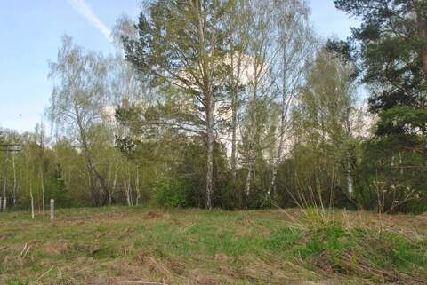 Продам: земельный участок 25 соток - Фото 5