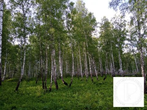 40 соток с лесом на станции Овинный - Фото 4