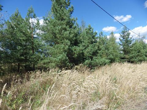 Продам земельные участки в закрытом коттеджном поселке в селе Малинино - Фото 3