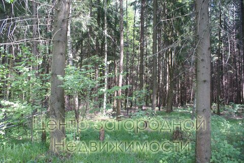 Участок, Киевское ш, Боровское ш, 20 км от МКАД, Милюково, коттеджный . - Фото 5