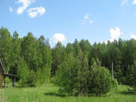 Лесной участок 10 сот, газ, охрана, Киевское ш, 49 км. от МКАД. - Фото 2