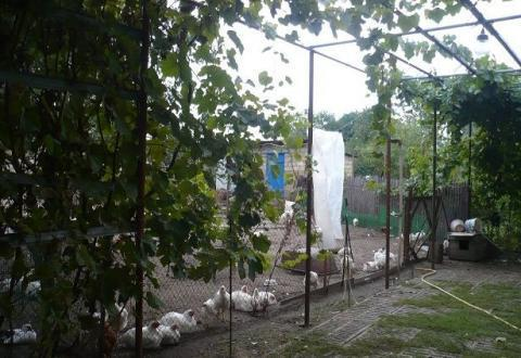 Фермерское хозяйство обоснованное на базе домашнего - Фото 1