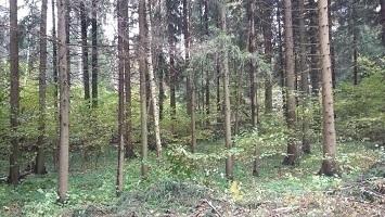 Продается земельный участок в микрорайоне Сходня, Московской области, - Фото 4