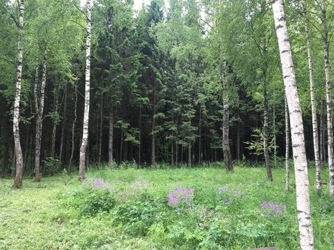 Продается земельный участок в СНТ Старт Кубинка - Фото 3