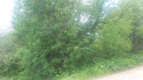Продаётся земельный участок 15 соток под ИЖС в середине деревни Большо - Фото 3