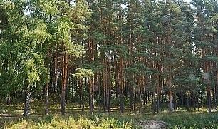 Продам таунхаус в Домодедово - Фото 4
