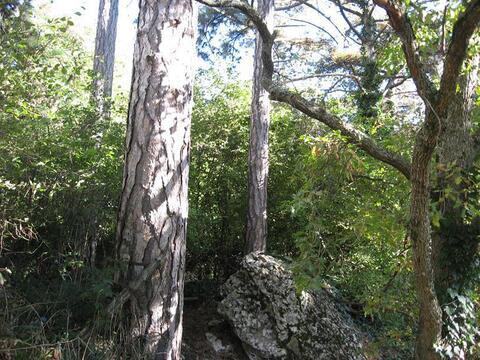 Продам з/у 6,4 сотки под ИЖС. г Ялта, в окружении заповедного леса. - Фото 2