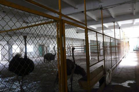 Страусиная ферма - Фото 1