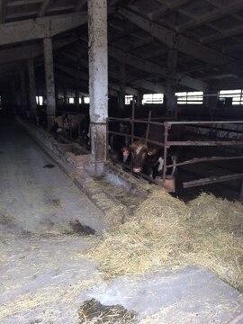 Продается ферма в Белгородской области - Фото 5