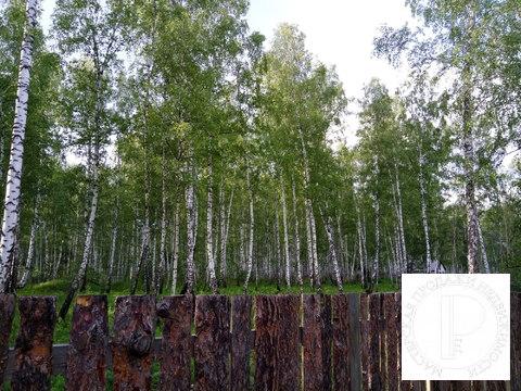 40 соток с лесом на станции Овинный - Фото 1