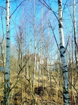 Земельный участок 6 соток, СНТ Красногорское - Фото 1