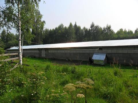 Продажа участка кфх 5,4 га в Тверской области д.Заболотье - Фото 5