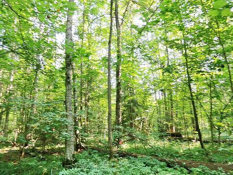 19,1 сотка в лесу газ и свет по границе, 69 км Калужское шоссе - Фото 2