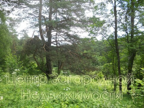Участок, Симферопольское ш, 110 км от МКАД, Велегож д. (Заокский р-н). . - Фото 4