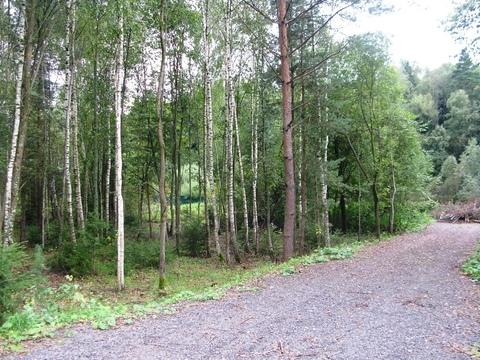 Участок 23,8 сот, с выходом в лес. - Фото 3