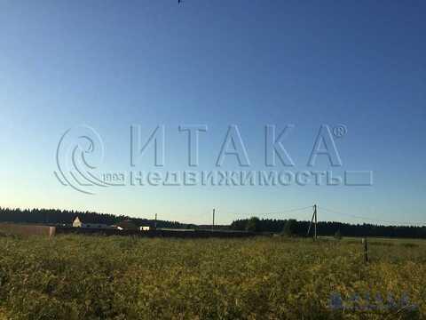Продажа участка, Красные Череповицы, Волосовский район - Фото 4