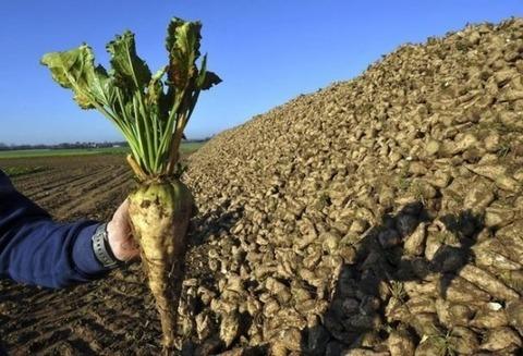 Сельхозпредприятие - Фото 4