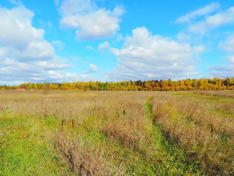 Земельный участок 245 соток, Серпуховский р-н, д. Шатово - Фото 4