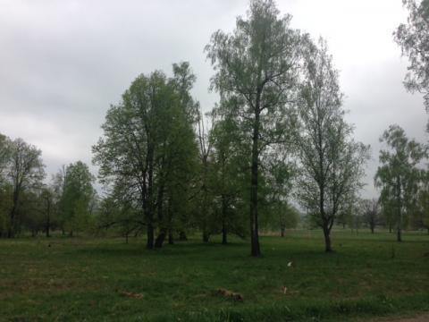 20 соток с лесом д. Прохорово Чеховский р-н - Фото 3