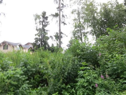 23 км Киевское шоссе, обжитой поселок, лесной участок, 26 сот - Фото 2