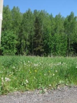 Лесной участок 10 сот, газ, охрана, Киевское ш, 49 км. от МКАД. - Фото 5