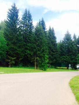 Лесной участок с соснами. 15 соток 6,5млн - Фото 2