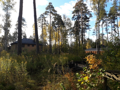 Лесной участок 10 соток - Фото 2