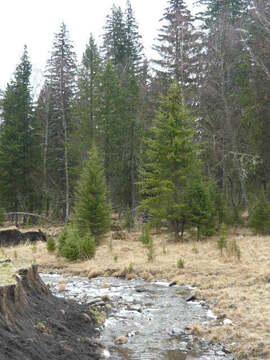 34 Га в уникальном месте , на горной речке - Фото 2