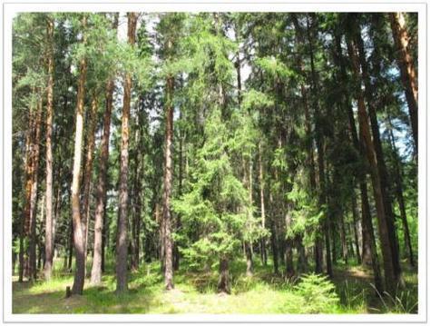 Участок 33 Га с лесом на 1 береговой линии р. Волга - Фото 2