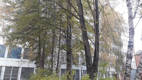 Земельный участок 0,8 га и здание - Фото 5