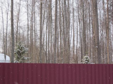 Участок с лесными деревьями, огорожен, Минское шоссе, Зеленая роща - Фото 3