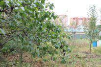 Продам участок в Домодедово в центральном районе - Фото 3