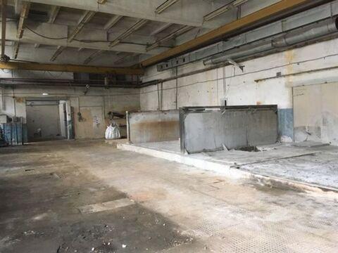 Сдам производственное помещение 527 кв.м, м. Черная речка - Фото 2