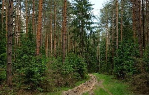 Первомайское+4 км, Цвелодубово - Фото 2