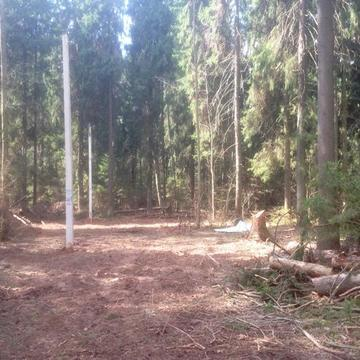 Продается 12 соток д.Новинки 50 км. от МКАД по Дмитровскому шоссе - Фото 2