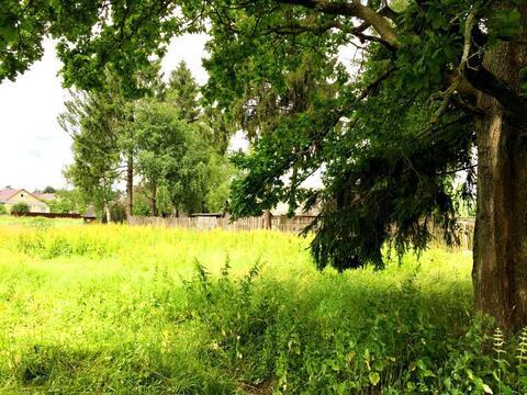 Участок с лесными деревьями д. Новинки 47км. от МКАД по Дмитровскому ш - Фото 1