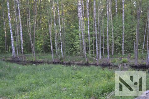 Продается лесной участок 20 сот. на границе Петербурга - Фото 1