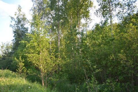 Продается лесной участок 20 сот. на границе Петербурга - Фото 3