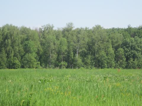 Участок праввилной формы в 5 мин езды от г.Серпухов - Фото 2