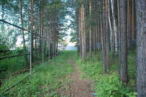 Лесной участок - 10 соток в Нижнеисетском районе - Фото 5
