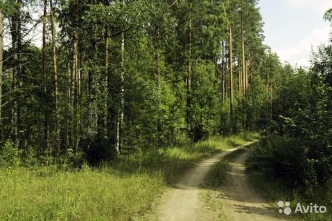 Огоньки + 15 км , Цвелодубово , Красный Курган - Фото 2